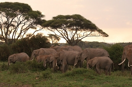 Experience the Magic of Kenya, Amboseli