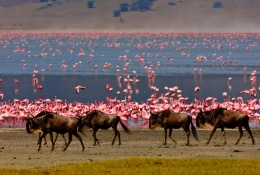 Ngorongoro Consarvation Area