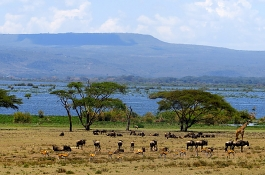 Explorers Lake Naivasha and Masai Mara Safari