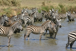 Serengeti on Sky Luxury Safaris 4 Days