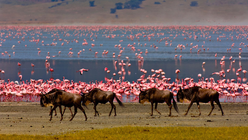 Flamingos at the Ngorongoro Crater